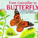 Image of book : From Caterpillar to Butterfly